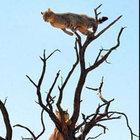 Kedi yolunu şaşırınca vahşi hayvanların arasında kaldı!