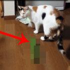 Kedinin salatalıkla imtihanı!
