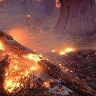 İki şehit sonrası çıkan çatışmalar yangına sebep oldu