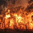 Fransa-İspanya: Orman yangınları paniğe yol açıyor
