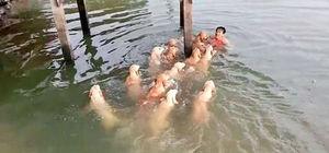 12 köpeğiyle denize girdi