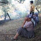 Aydın'da binlerce zeytin ağacı yandı!