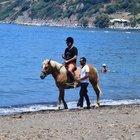 Berdan Mardini plajda atla dolaştı