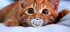 Kedi videoları insanları nasıl etkiliyor!