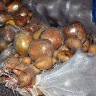 Patates' şekli verilen eroin paketleri polisin dikkatinden kaçmadı