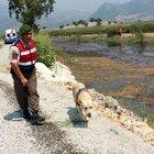 Antalya'da 77 yaşındaki kadının cesedi derede bulundu