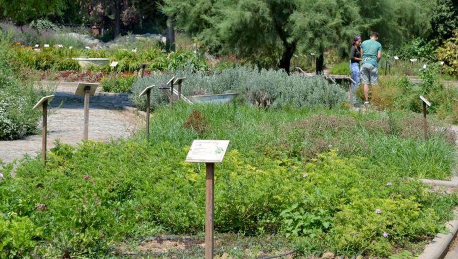 Tıbbi Bitkiler Bahçesi'nden 'Fitoterapi' desteği