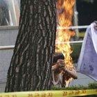 Güney Koreli gösterici kendini yaktı