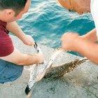 Balık beklerken oltadan martı çıktı