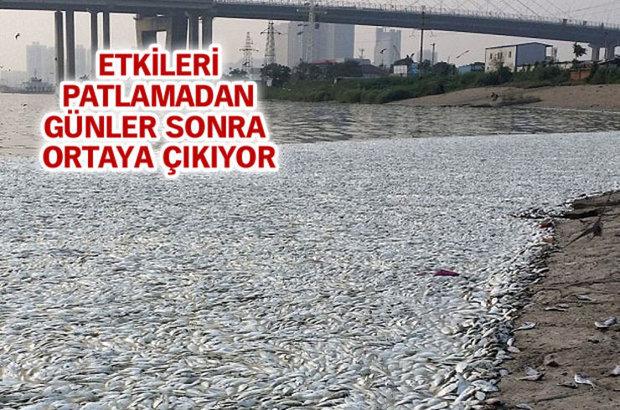 Çin'de geçen hafta patlamalarla sarsılan Tianjin kenti yakınlarındaki nehirde ölü balıklar belirdi