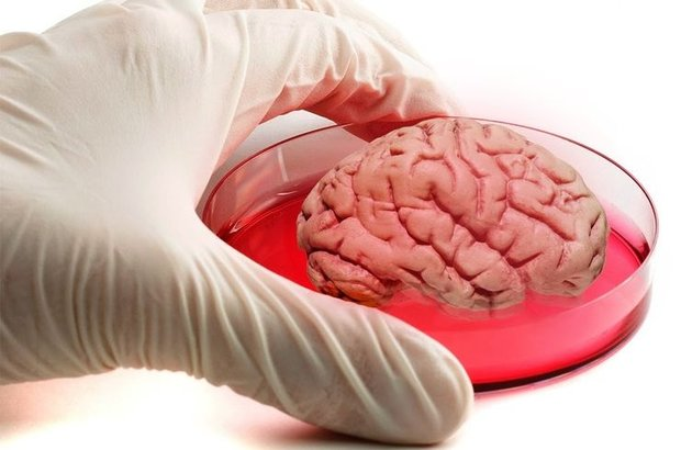 Beyin, Ohio State Üniversitesi, beyin üretildi, Rene Anand