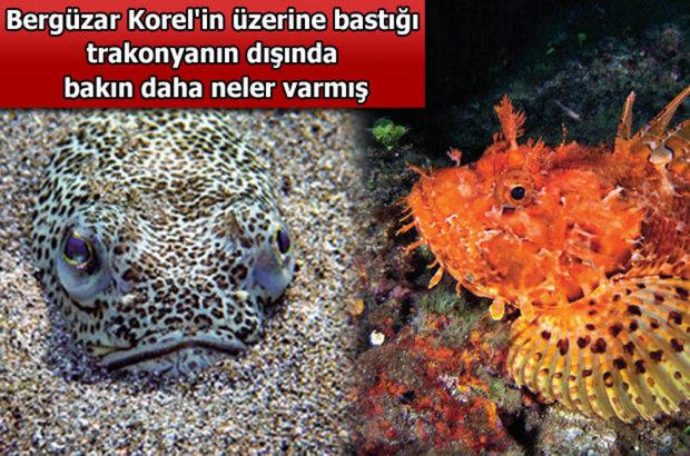 Türk denizlerindeki 40 tehlike!