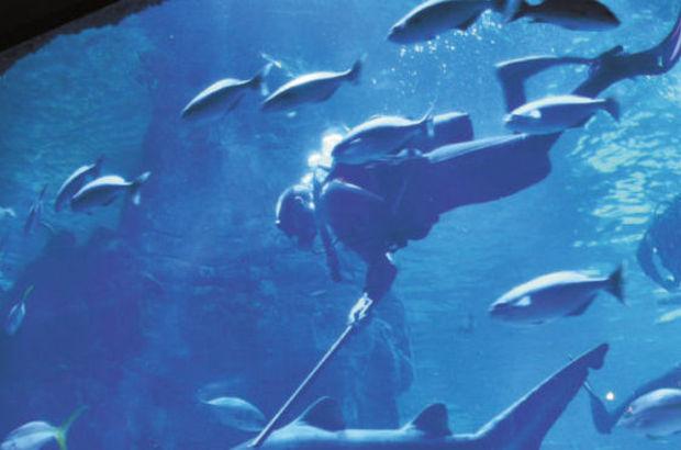 Florya'da köpekbalığı besleme seansı