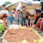Fındıkta çocuk işçiliğine son verecek proje