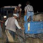 Otomobil koyun sürüsüne daldı: 3 yaralı, 45 koyun telef oldu