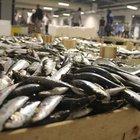 2015 balık avı sezonu başladı