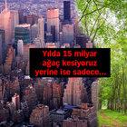 Dünya üzerinde en çok ağaç Rusya'da!