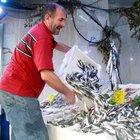 Karadeniz'de istavrit balıkçının yüzünü güldürdü