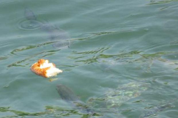 Kurbağalıdere'ye balıklar geri döndü