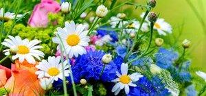 Anlamını bilmeniz gereken 25 çiçek