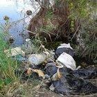 Sakarya'da gölet kenarında büyükbaş hayvan kelleleri bulundu