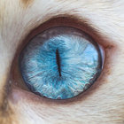 Kedilerin gözlerini hiç böyle görmediniz!