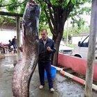 Dereden 120 kiloluk balık çıktı