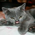 Bu kedi bildiklerinizden farklı!
