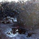 Hırsızlar petrol çalmak isterken boruyu patlattı