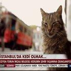 İstanbul'da kedi belgeseli çekildi