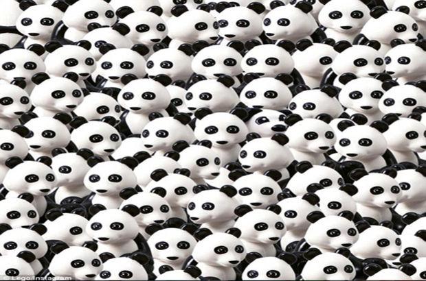 Pandaların arasındaki köpeği gördünüz mü?