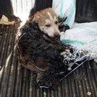 Bodrum'da köpekler ihmal kurbanı oldu