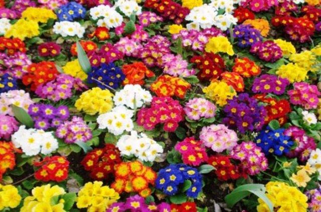 Hangi çiçekler Kışın Açar Yaşam Güncel Haberler