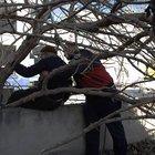 85 yaşında ağaçta mahsur kaldı