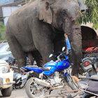 Öfkeli fil köyü yerle bir etti