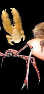 Dünya üzerindeki en ilginç canlılar...