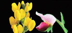Aşkın bitkisel hayatı