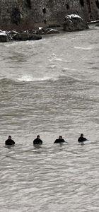 Tokat'ta kaybolan 2 çocuğu 12 kişilik özel ekip arayacak