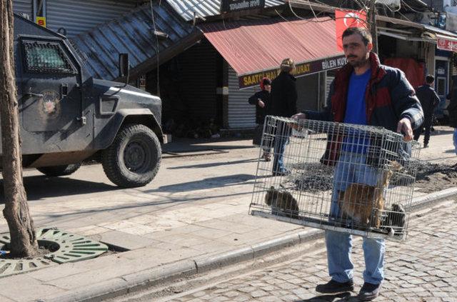 Sur'da çatışma ortasında kalan 50 kedi ve 4 köpek kurtarıldı