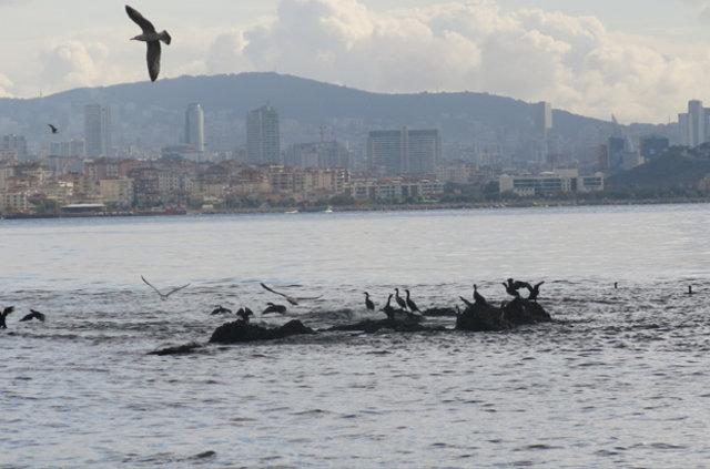 İstanbul'un kayıp adası için çalışmalar başladı