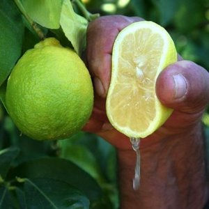 Bileğinize birkaç limon damlası damlatıp bekleyin!