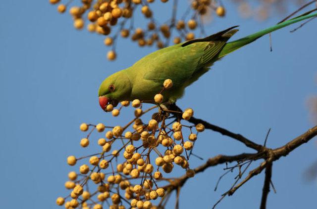 Üsküdar'a papağan yağdı