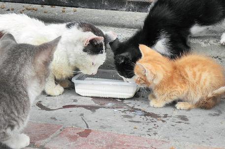 Istanbul Un Sahipsiz Hayvanlari Sokaklarda Son Dakika