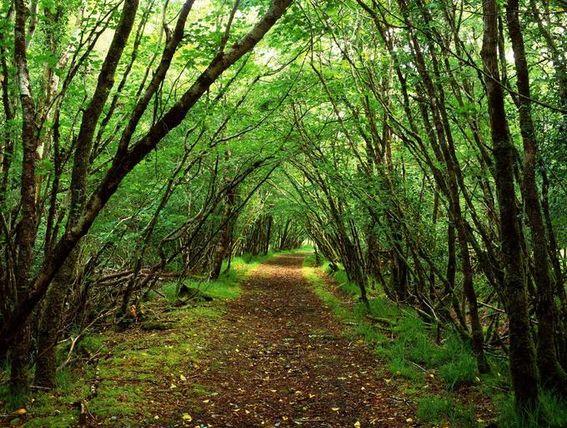 Orman Haftası şiirleri Orman Haftası Resmi 21 26 Mart