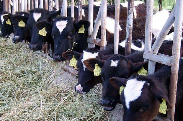 Sanayiciye süt fiyatı tepkisi
