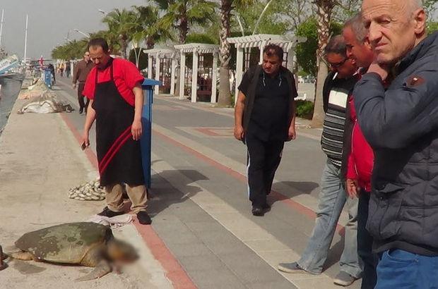 Fethiye körfezinin maskotu 'Caretta Hamza' öldü