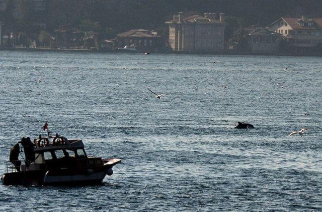 İstanbul Boğazı'ndan yunuslar geçti