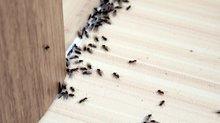 Böceklere zarar vermeden doğal yollarla kurtulmanın yolları!
