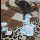 Konya'da kedinin parayla oyunu