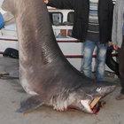 Balıkçılar büyük balıklardan şikayetçi